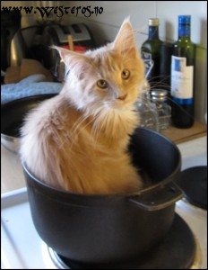 Pot Cat Hieronymus